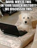 Dog with a laptop memes