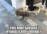 Friendly dog funny memes