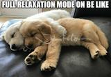 Relaxation mode on memes
