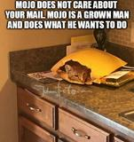 Your mail memes